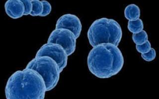 Пневмококковая инфекция у детей: что делать, как лечить