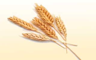 Аллергия у ребенка на пшеницу: как распознать, чем лечить