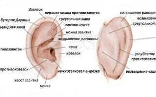 Болит ухо у ребенка без температуры: как распознать, чем лечить
