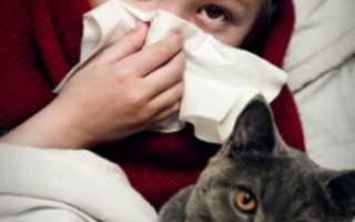 Аллергия на кошку симптомы у ребенка: как распознать, чем лечить