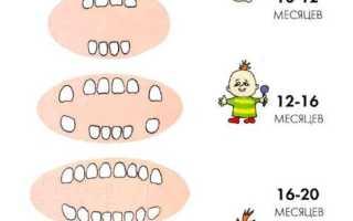 Схема молочных зубов