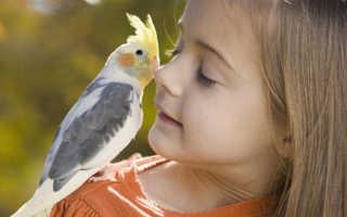 Аллергия у детей на попугаев симптомы: как распознать, чем лечить