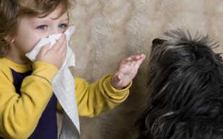 Аллергия на животных симптомы у детей: как распознать, чем лечить