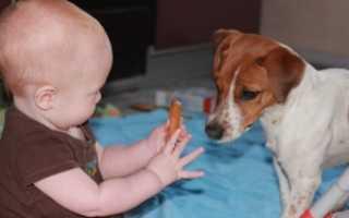 Как проявляется аллергия на собак у детей: как распознать, чем лечить